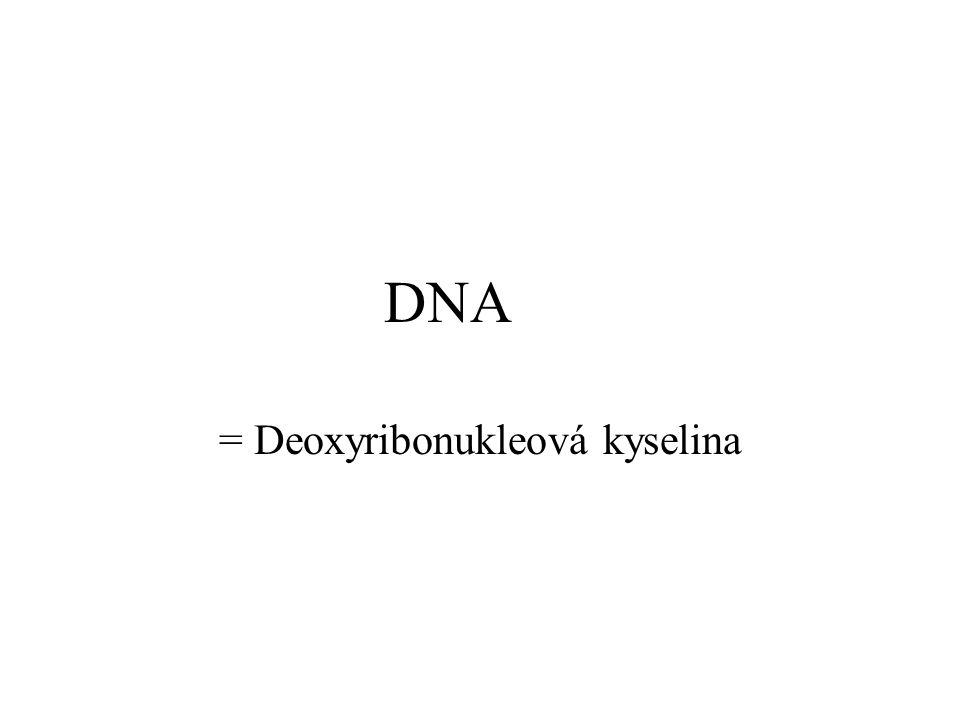 DNA = Deoxyribonukleová kyselina