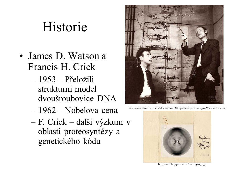 Historie James D. Watson a Francis H. Crick –1953 – Přeložili strukturní model dvoušroubovice DNA –1962 – Nobelova cena –F. Crick – další výzkum v obl