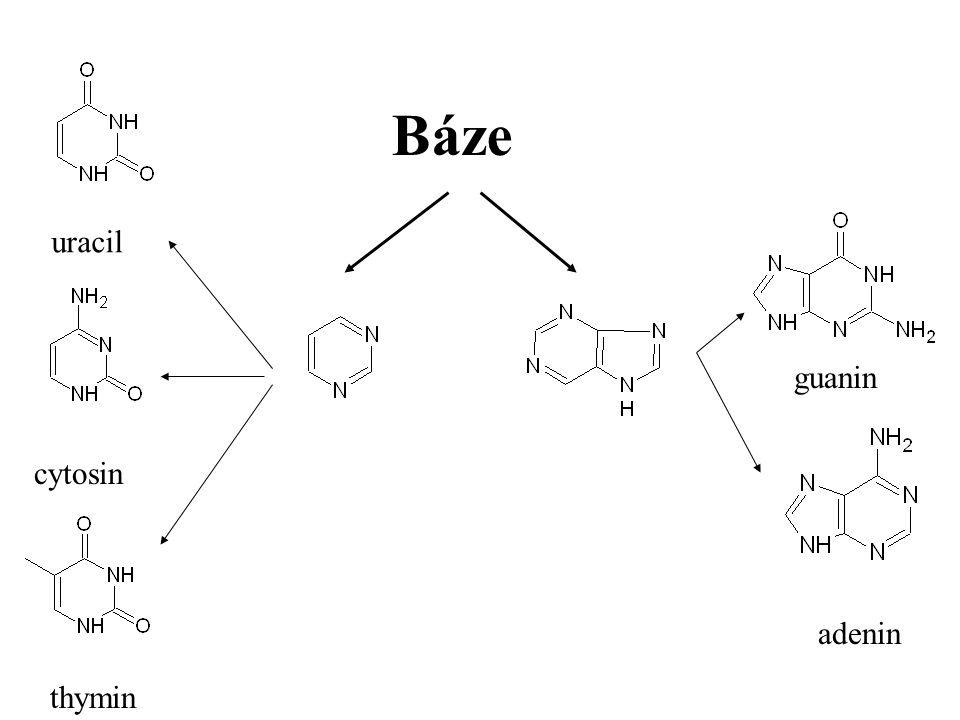 Báze uracil cytosin thymin guanin adenin