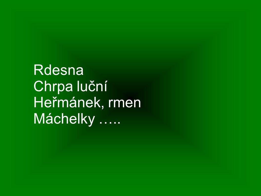 Rdesna Chrpa luční Heřmánek, rmen Máchelky …..
