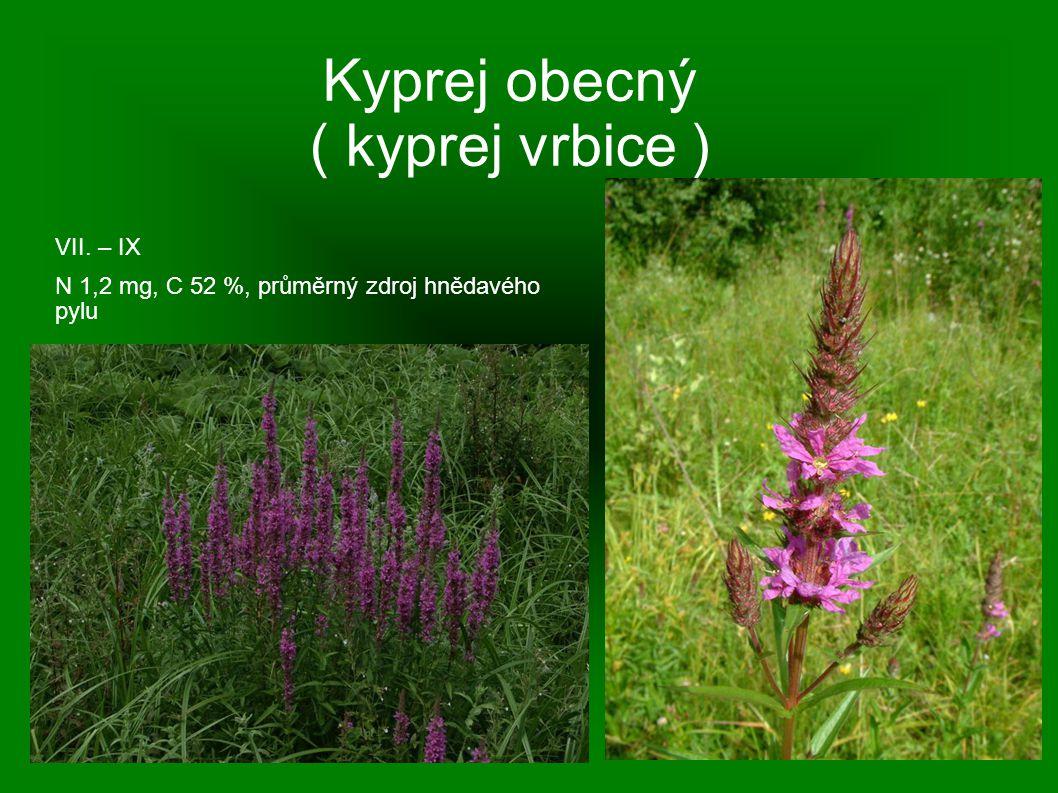 Kyprej obecný ( kyprej vrbice ) VII. – IX N 1,2 mg, C 52 %, průměrný zdroj hnědavého pylu