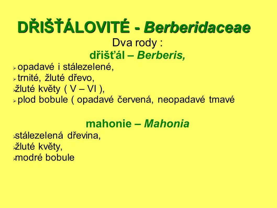 DŘIŠŤÁLOVITÉ - Berberidaceae Dva rody : dřišťál – Berberis,  opadavé i stálezelené,  trnité, žluté dřevo,  žluté květy ( V – VI ),  plod bobule ( opadavé červená, neopadavé tmavé mahonie – Mahonia  stálezelená dřevina,  žluté květy,  modré bobule