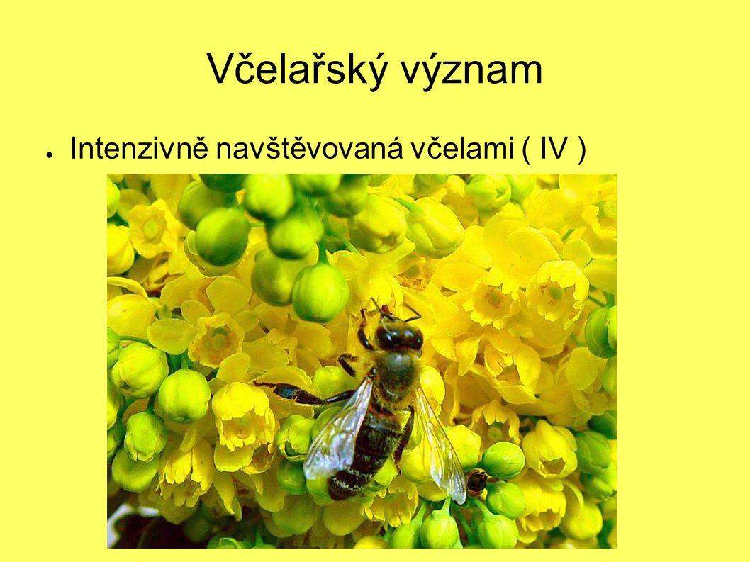 Včelařský význam ● Intenzivně navštěvovaná včelami ( IV )