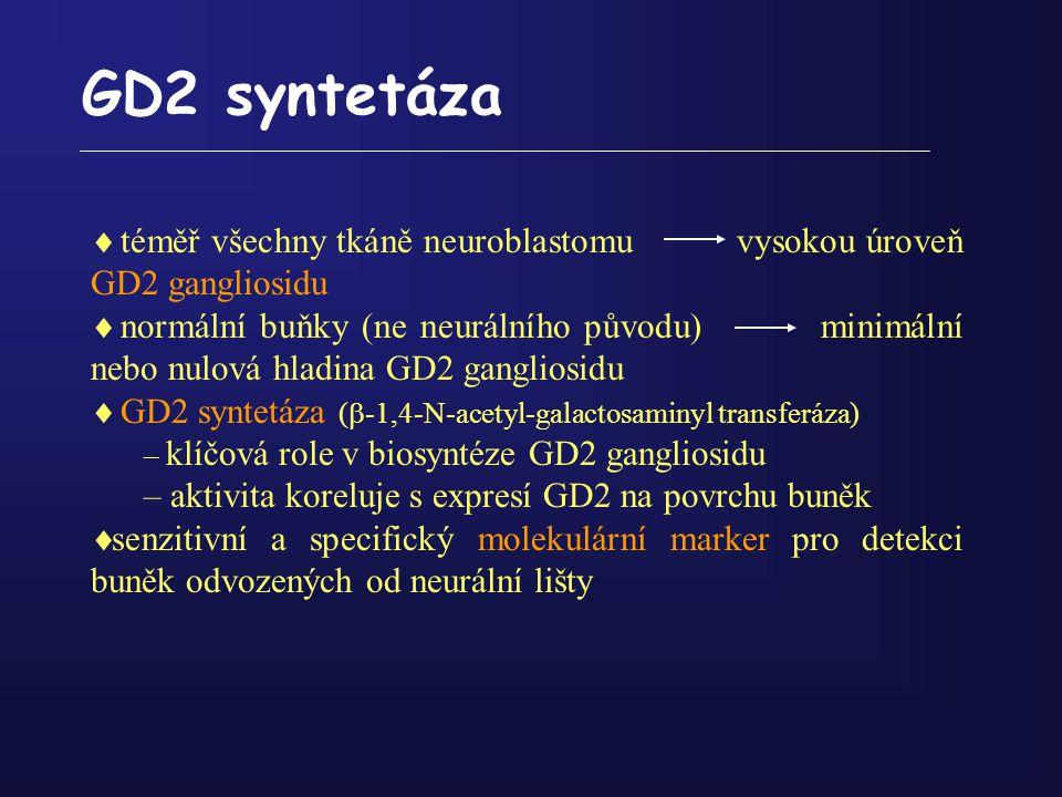 GD2 syntetáza  téměř všechny tkáně neuroblastomu vysokou úroveň GD2 gangliosidu  normální buňky (ne neurálního původu) minimální nebo nulová hladina