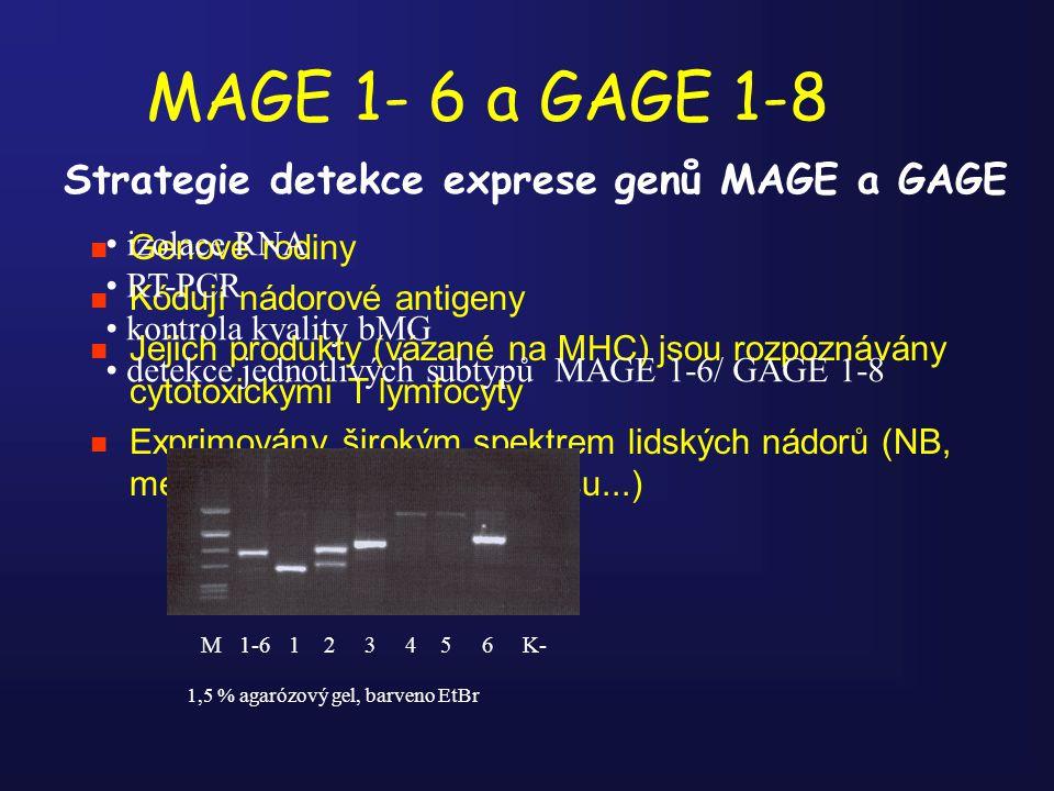MAGE 1- 6 a GAGE 1-8 n Genové rodiny n Kódují nádorové antigeny n Jejich produkty (vázané na MHC) jsou rozpoznávány cytotoxickými T lymfocyty n Exprim