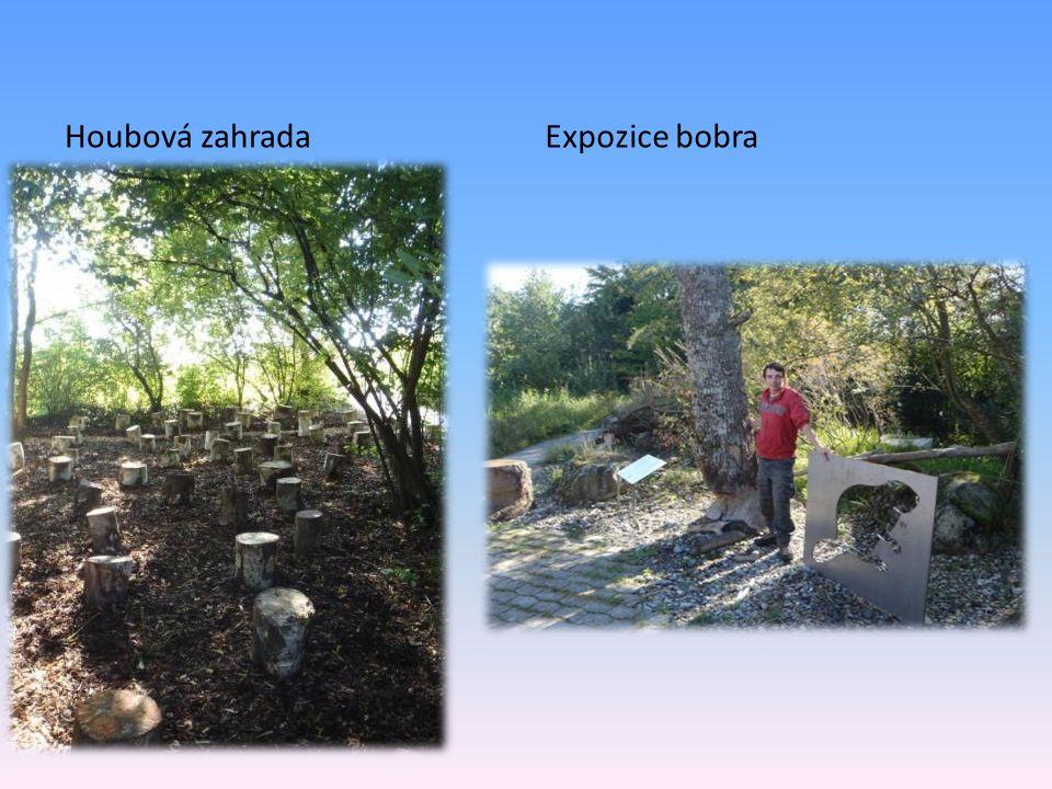 Houbová zahradaExpozice bobra