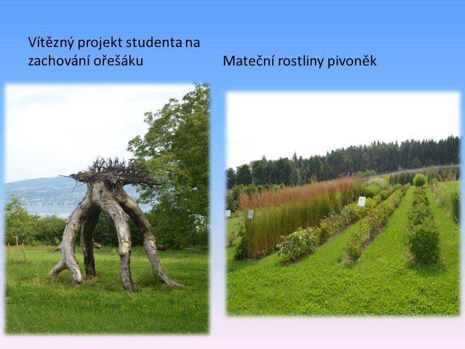 Vítězný projekt studenta na zachování ořešákuMateční rostliny pivoněk