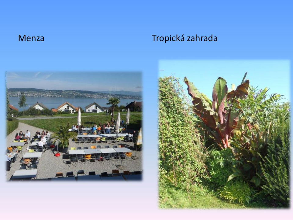 MenzaTropická zahrada