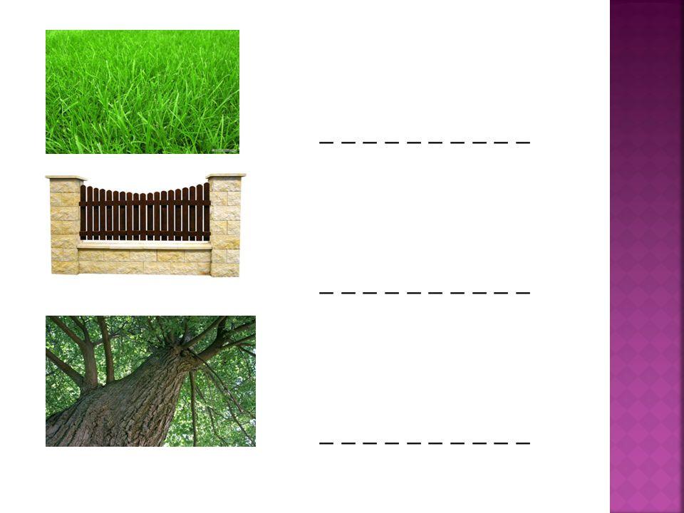  a garden  a path  flowers  a lawn  a fence  a tree
