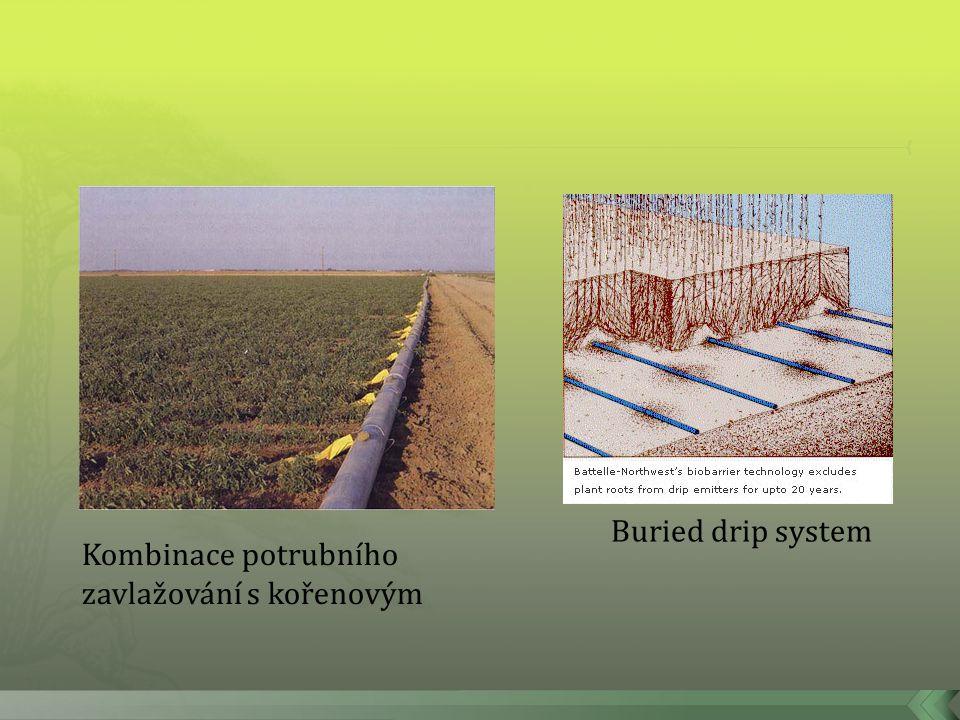 Buried drip system Kombinace potrubního zavlažování s kořenovým