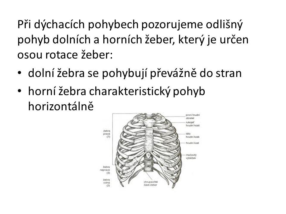 Při dýchacích pohybech pozorujeme odlišný pohyb dolních a horních žeber, který je určen osou rotace žeber: dolní žebra se pohybují převážně do stran horní žebra charakteristický pohyb horizontálně
