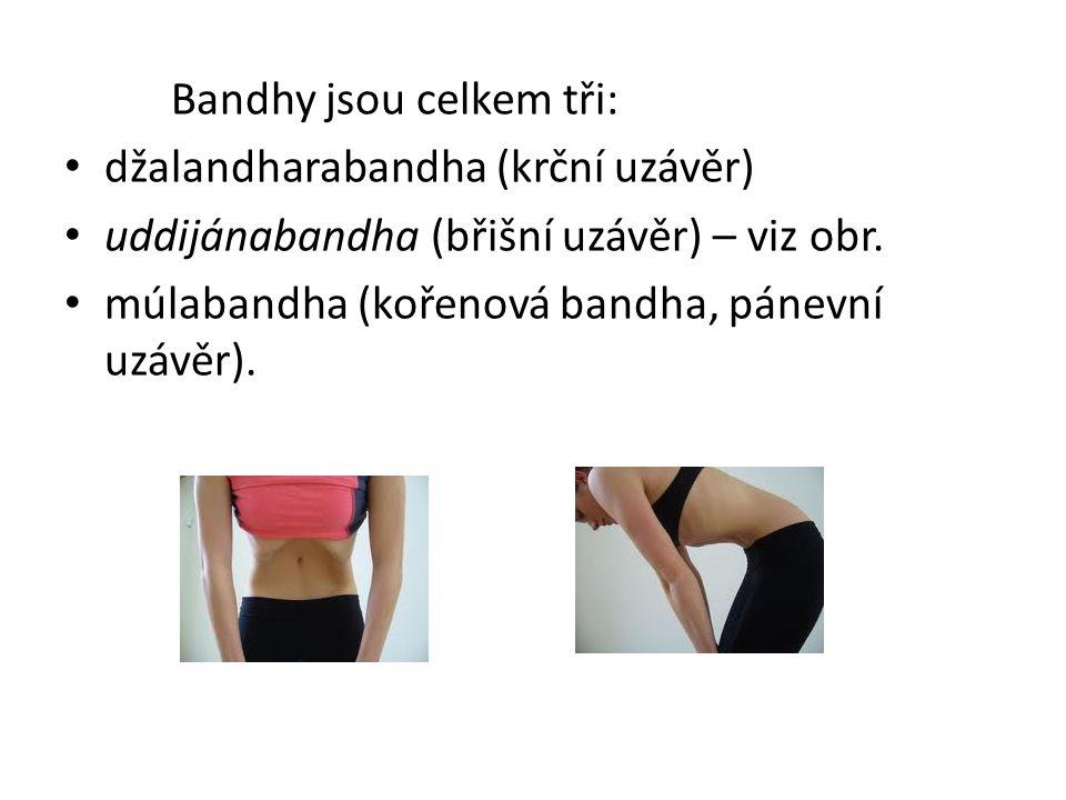 Bandhy jsou celkem tři: džalandharabandha (krční uzávěr) uddijánabandha (břišní uzávěr) – viz obr. múlabandha (kořenová bandha, pánevní uzávěr).