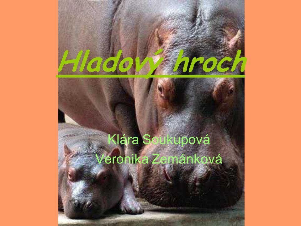 Hladový hroch Klára Soukupová Veronika Zemánková