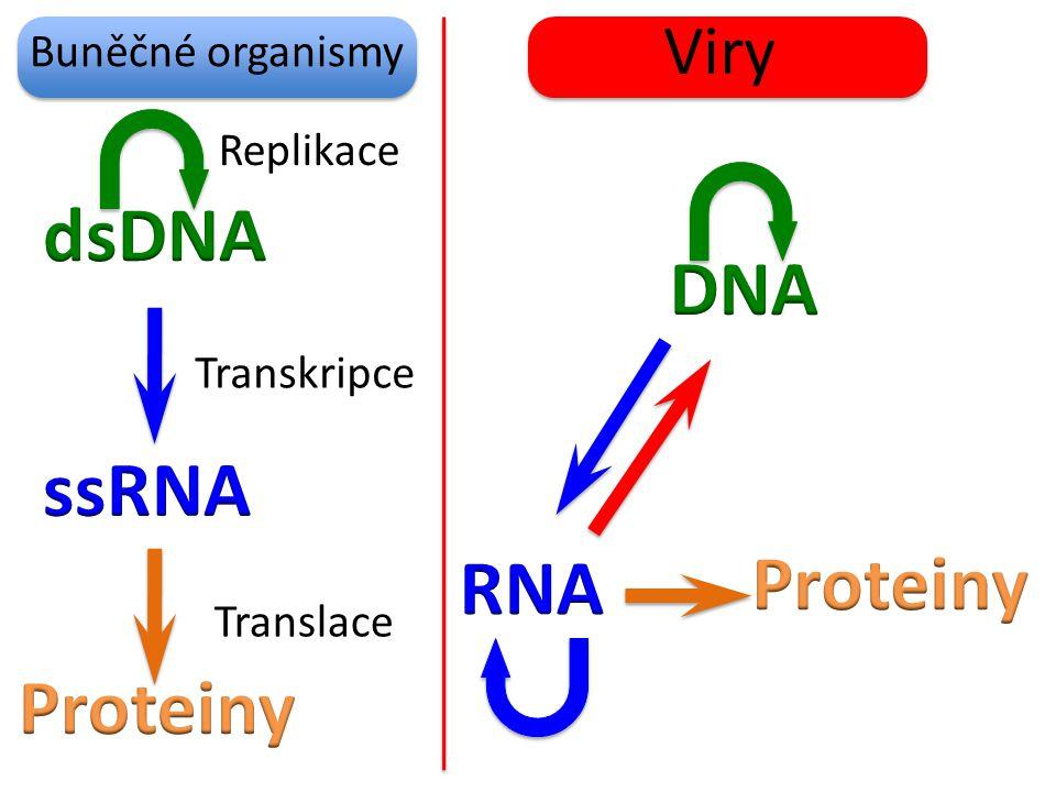 Buněčné organismy Viry Replikace Transkripce Translace