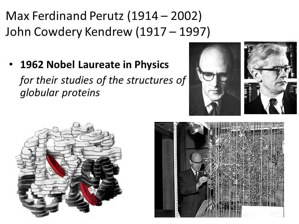Max Ferdinand Perutz (1914 – 2002) John Cowdery Kendrew (1917 – 1997) 1962 Nobel Laureate in Physics for their studies of the structures of globular p