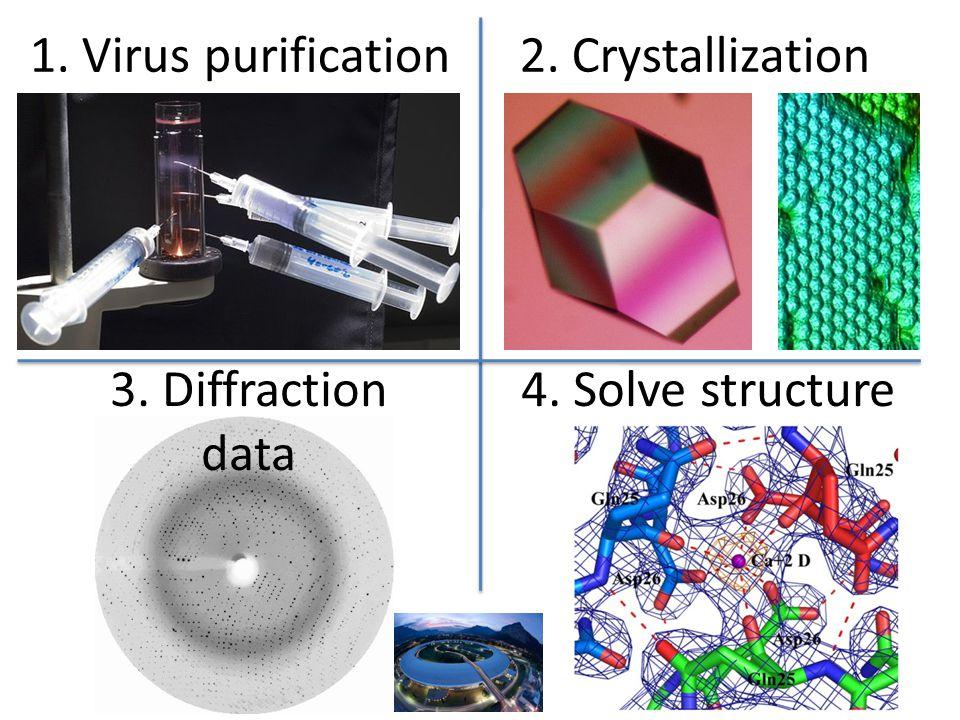 1. Virus purification2. Crystallization 3. Diffraction data 4. Solve structure