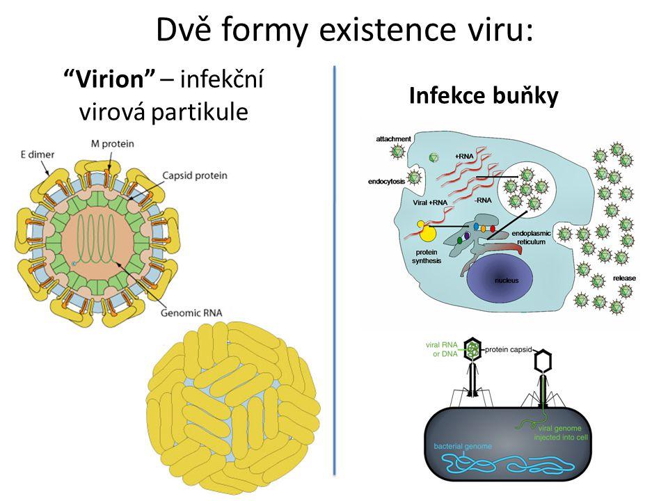 """""""Virion"""" – infekční virová partikule Dvě formy existence viru: Infekce buňky"""