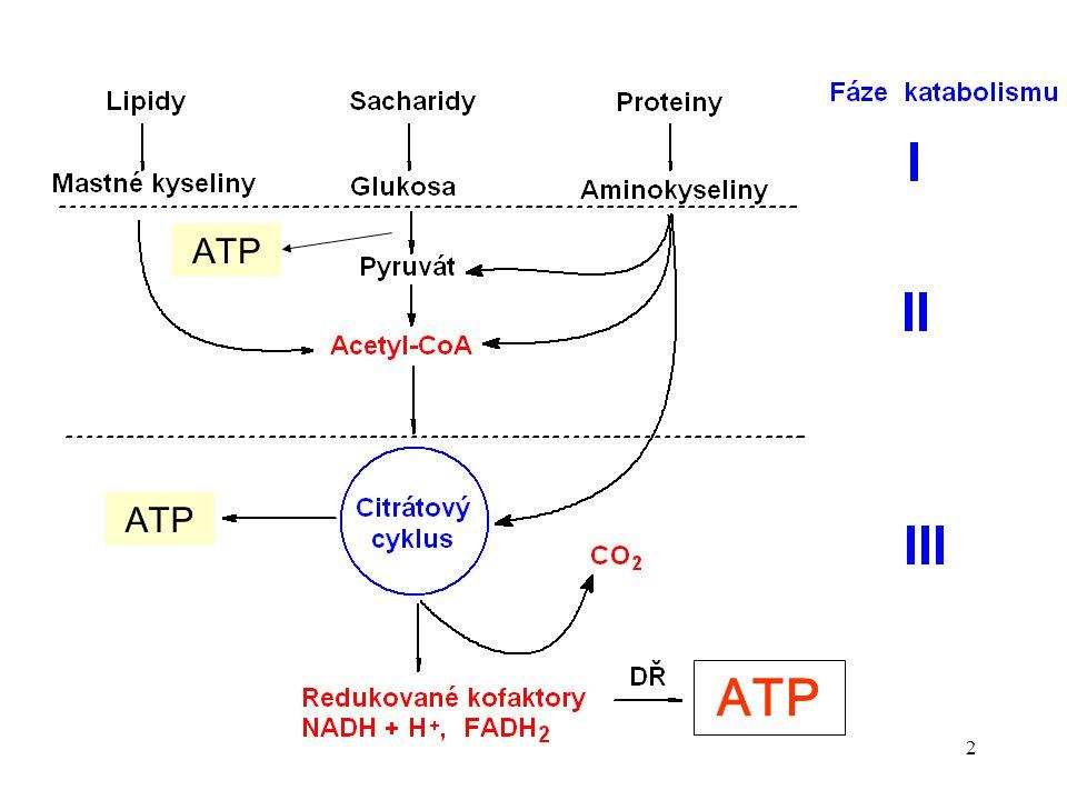 13 Význam citrátového cyklu Katabolický charakter Anabolický charakter CC celková oxidace uhlíkatých sloučenin C  CO 2 H  redukované koenzymy energie zdroj sloučenin (prekursorů) pro biosyntetické reakce meziprodukty CC  syntetické reakce