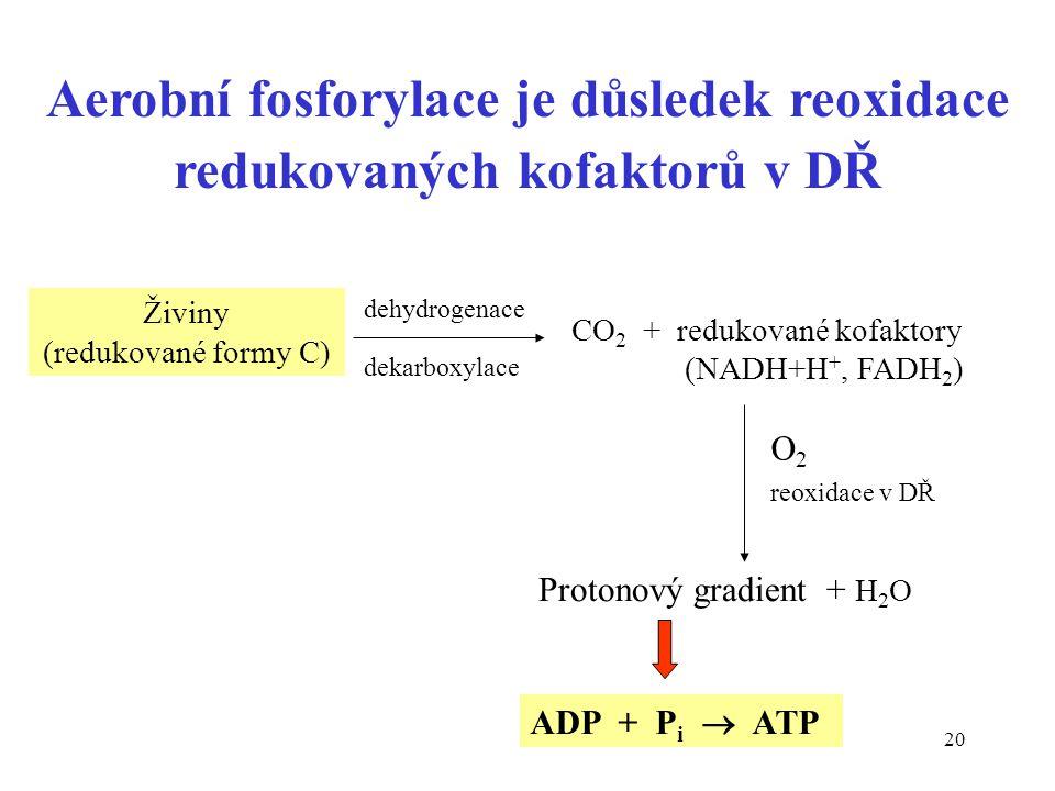 20 Aerobní fosforylace je důsledek reoxidace redukovaných kofaktorů v DŘ Živiny (redukované formy C) CO 2 + redukované kofaktory (NADH+H +, FADH 2 ) r