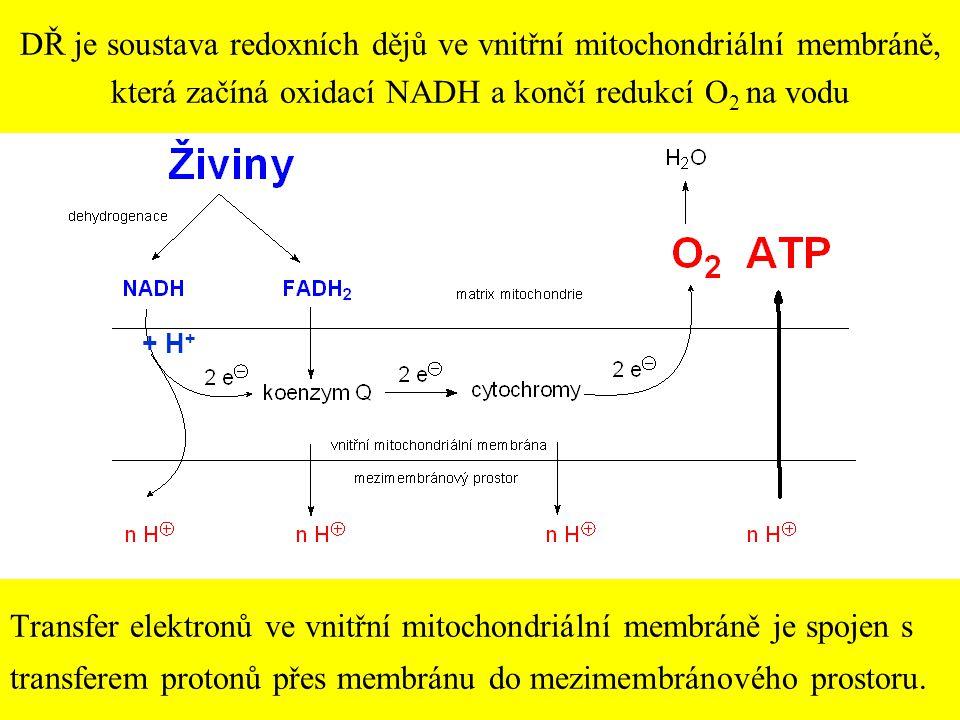 22 DŘ je soustava redoxních dějů ve vnitřní mitochondriální membráně, která začíná oxidací NADH a končí redukcí O 2 na vodu + H + Transfer elektronů v