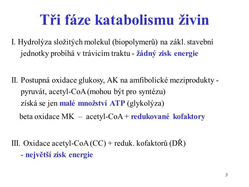 3 Tři fáze katabolismu živin I. Hydrolýza složitých molekul (biopolymerů) na zákl. stavební jednotky probíhá v trávicím traktu - žádný zisk energie II