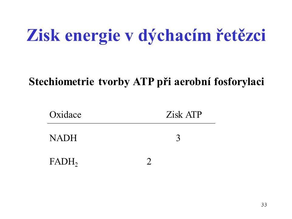 33 Zisk energie v dýchacím řetězci Stechiometrie tvorby ATP při aerobní fosforylaci OxidaceZisk ATP NADH 3 FADH 2 2