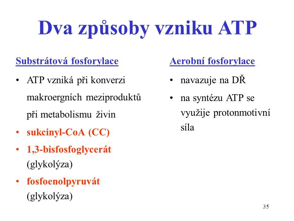 35 Substrátová fosforylace ATP vzniká při konverzi makroergních meziproduktů při metabolismu živin sukcinyl-CoA (CC) 1,3-bisfosfoglycerát (glykolýza)