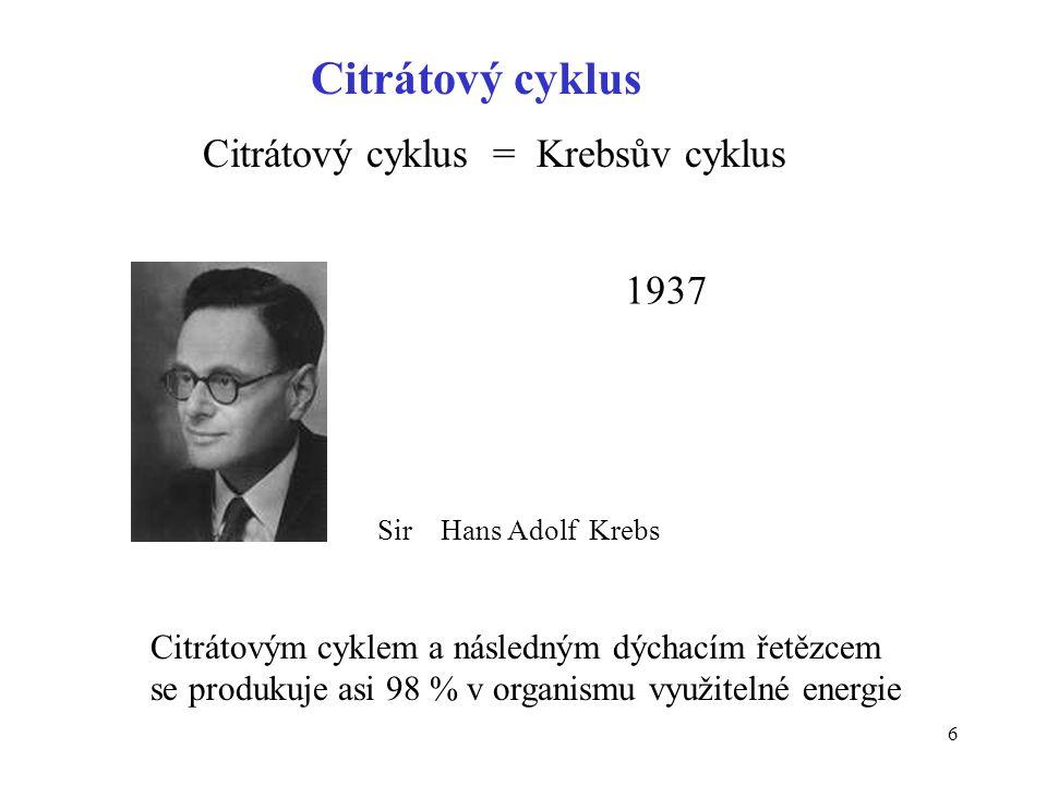 6 Citrátový cyklus Citrátový cyklus = Krebsův cyklus 1937 Sir Hans Adolf Krebs Citrátovým cyklem a následným dýchacím řetězcem se produkuje asi 98 % v