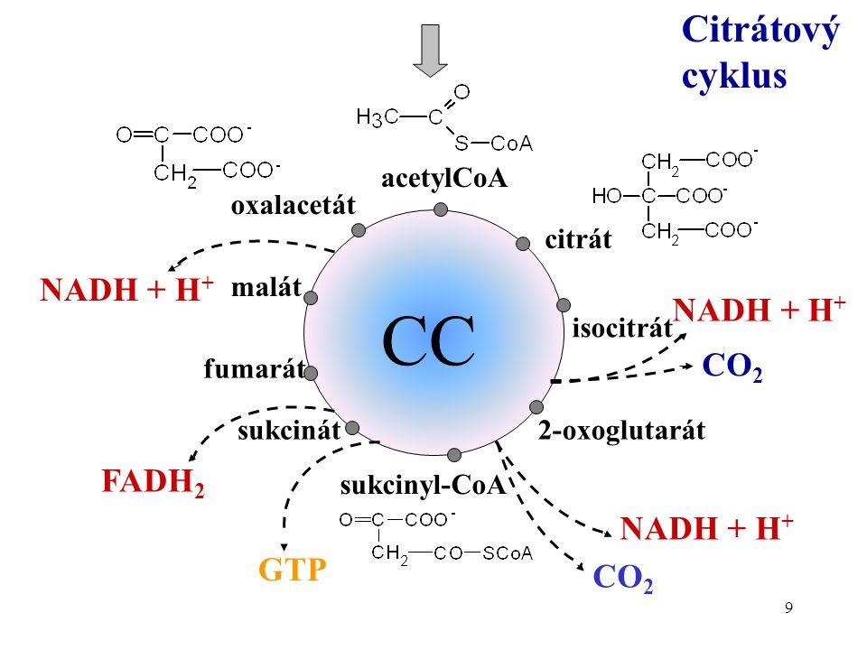 9 Citrátový cyklus CC acetylCoA citrát isocitrát 2-oxoglutarát sukcinyl-CoA fumarát malát oxalacetát NADH + H + CO 2 NADH + H + CO 2 sukcinát GTP FADH