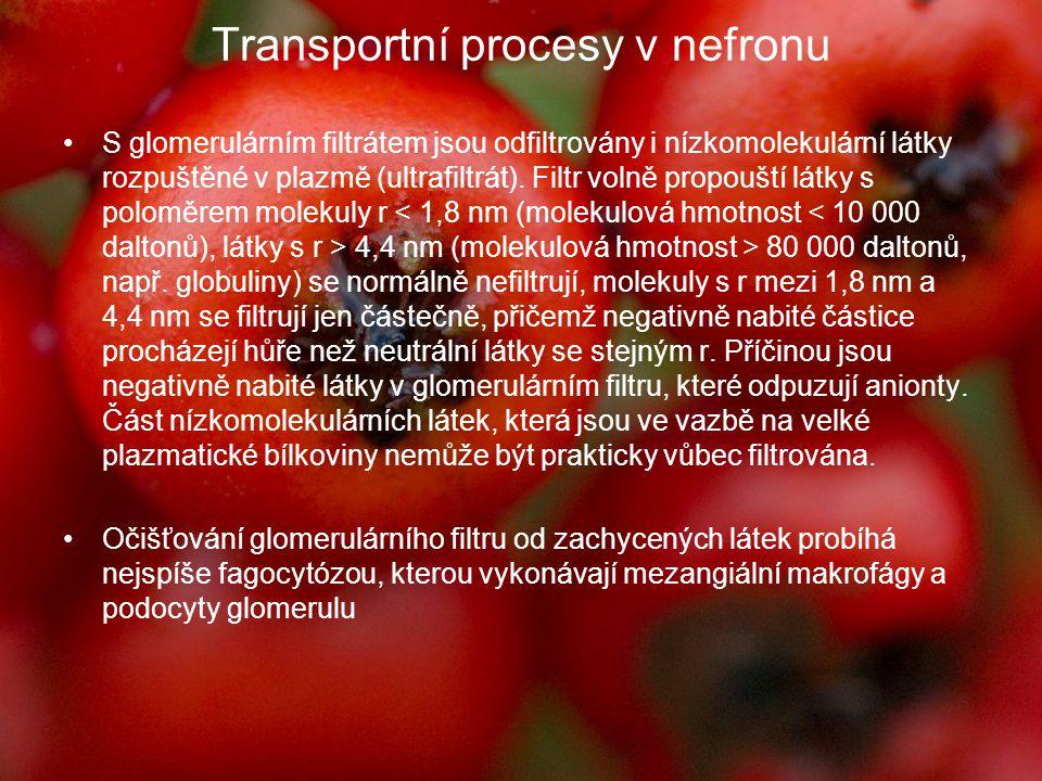 Transportní procesy v nefronu S glomerulárním filtrátem jsou odfiltrovány i nízkomolekulární látky rozpuštěné v plazmě (ultrafiltrát). Filtr volně pro