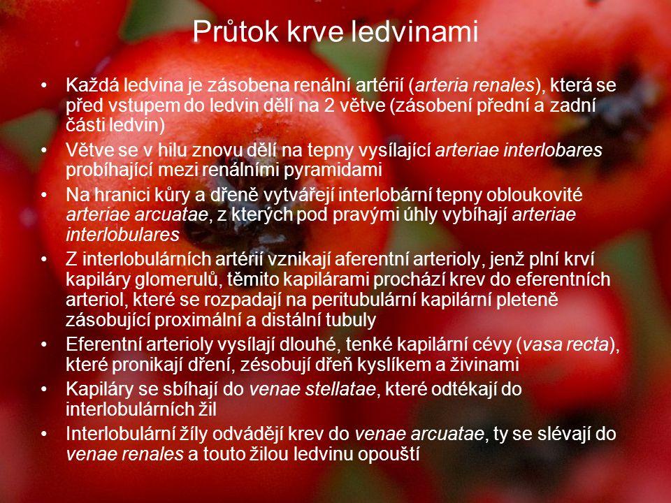 Příčiny onemocnění ledvin: Typické západní strava bohatá na průmyslově zpracované a čištěné potraviny a živočišné bílkoviny Snížená imunita organismu Špatná fce příštítných tělísek (hospodaření vápníku) Genetická zátěž