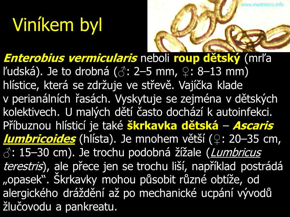 Viníkem byl Enterobius vermicularis neboli roup dětský (mrľa ľudská). Je to drobná ( ♂ : 2–5 mm, ♀ : 8–13 mm) hlístice, která se zdržuje ve střevě. Va