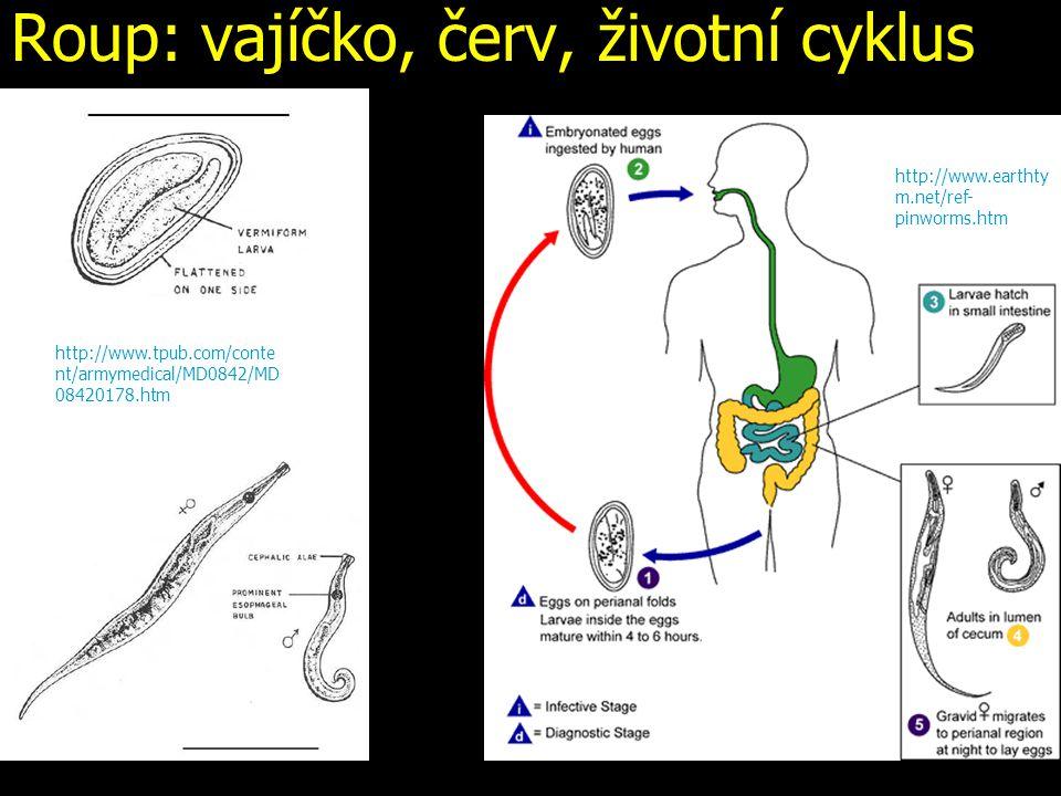 Roup: vajíčko, červ, životní cyklus http://www.earthty m.net/ref- pinworms.htm http://www.tpub.com/conte nt/armymedical/MD0842/MD 08420178.htm