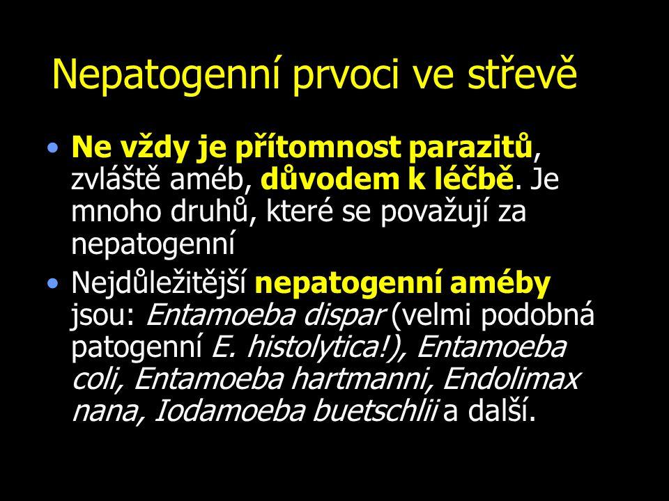 Nepatogenní prvoci ve střevě Ne vždy je přítomnost parazitů, zvláště améb, důvodem k léčbě. Je mnoho druhů, které se považují za nepatogenní Nejdůleži
