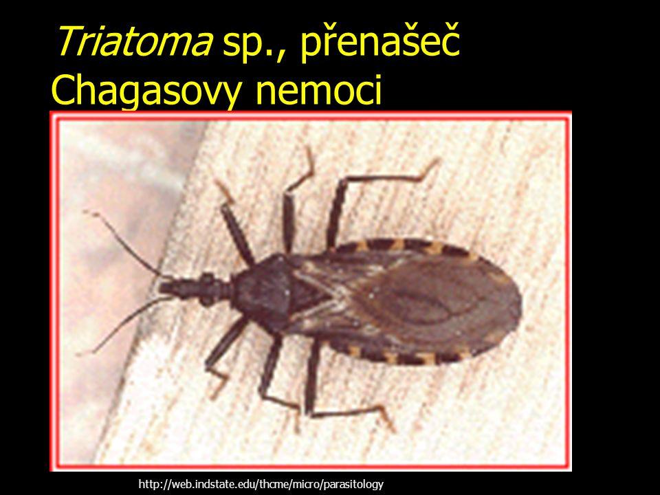 Triatoma sp., přenašeč Chagasovy nemoci http://web.indstate.edu/thcme/micro/parasitology