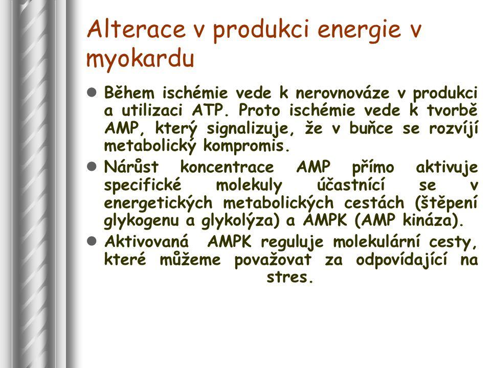 Alterace v produkci energie v myokardu Během ischémie vede k nerovnováze v produkci a utilizaci ATP.