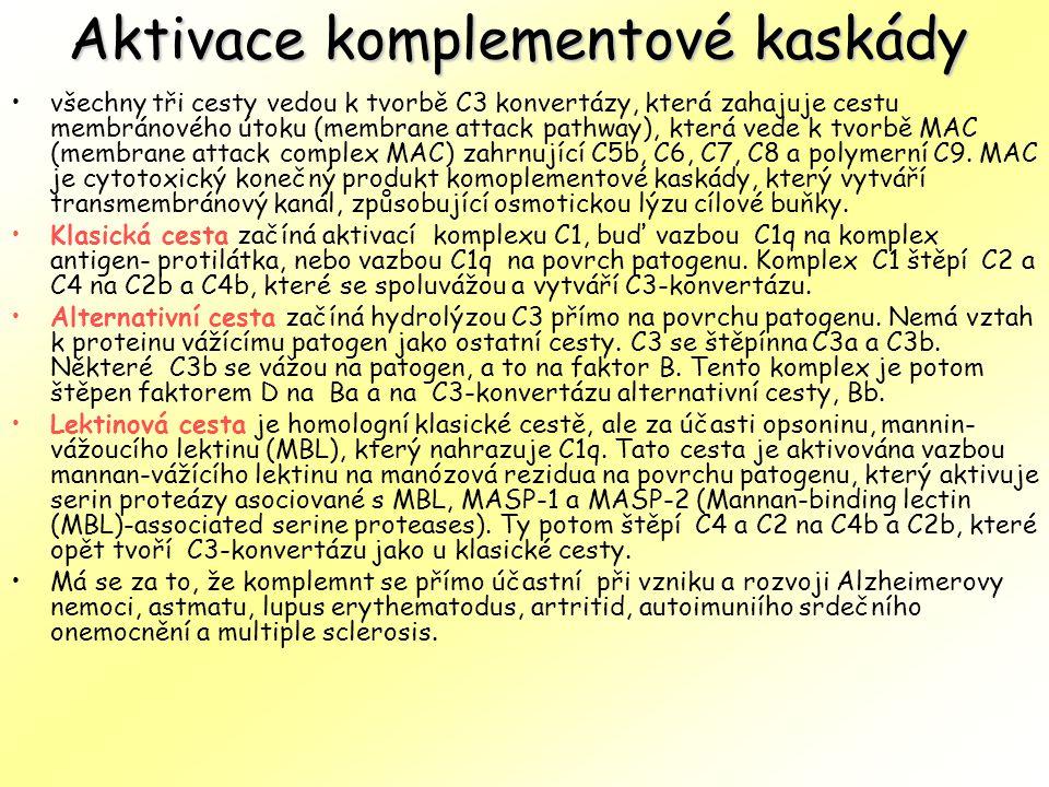 Aktivace komplementové kaskády všechny tři cesty vedou k tvorbě C3 konvertázy, která zahajuje cestu membránového útoku (membrane attack pathway), kter