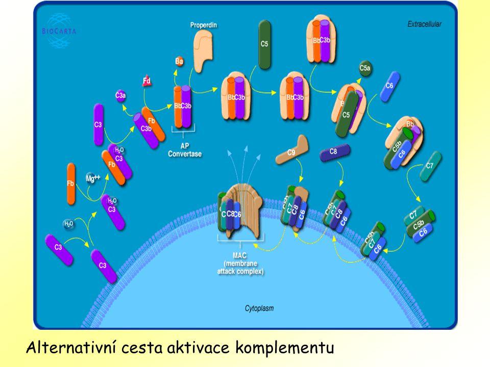 Alternativní cesta aktivace komplementu