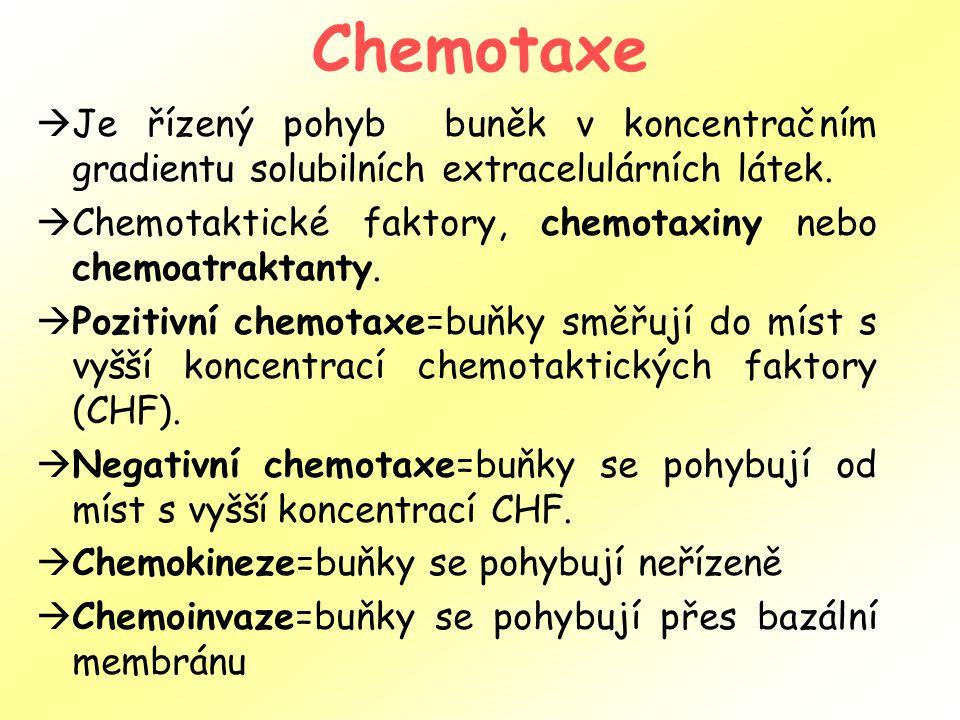 Chemotaxe  Je řízený pohyb buněk v koncentračním gradientu solubilních extracelulárních látek.  Chemotaktické faktory, chemotaxiny nebo chemoatrakta