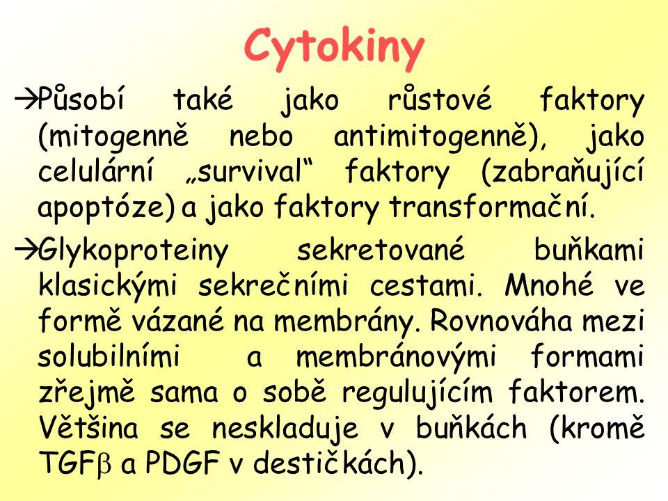 """Cytokiny  Působí také jako růstové faktory (mitogenně nebo antimitogenně), jako celulární """"survival faktory (zabraňující apoptóze) a jako faktory transformační."""