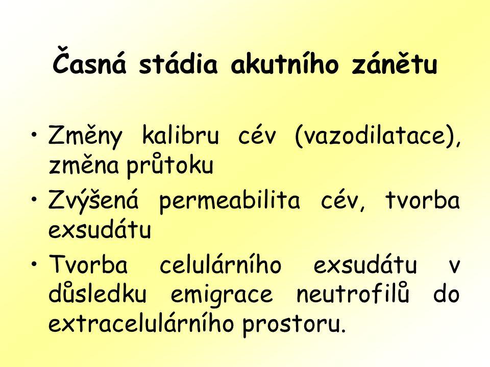 Časná stádia akutního zánětu Změny kalibru cév (vazodilatace), změna průtoku Zvýšená permeabilita cév, tvorba exsudátu Tvorba celulárního exsudátu v d