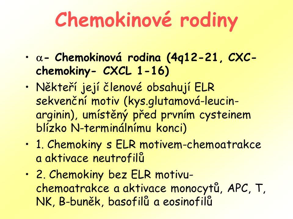 Chemokinové rodiny  - Chemokinová rodina (4q12-21, CXC- chemokiny- CXCL 1-16) Někteří její členové obsahují ELR sekvenční motiv (kys.glutamová-leucin