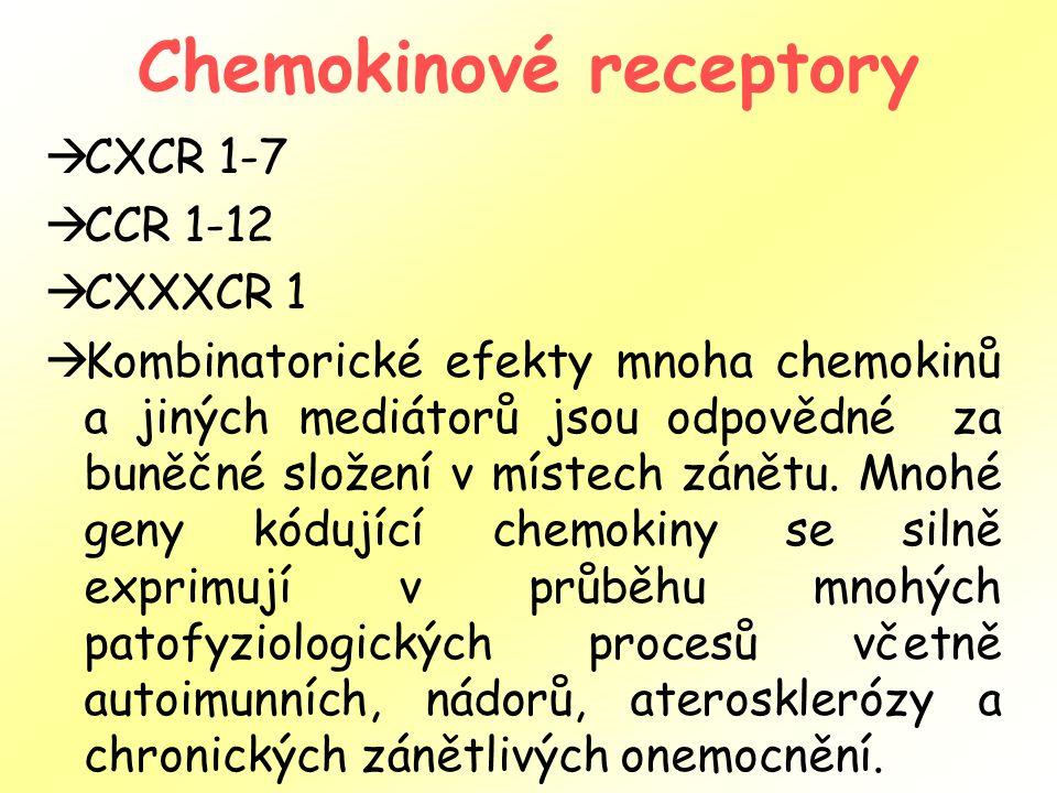 Chemokinové receptory  CXCR 1-7  CCR 1-12  CXXXCR 1  Kombinatorické efekty mnoha chemokinů a jiných mediátorů jsou odpovědné za buněčné složení v