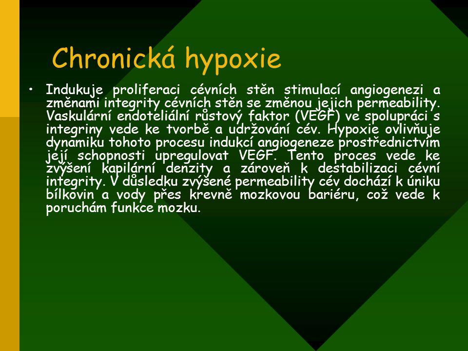 Chronická hypoxie Indukuje proliferaci cévních stěn stimulací angiogenezi a změnami integrity cévních stěn se změnou jejich permeability. Vaskulární e