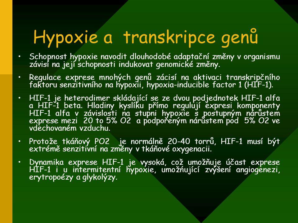 Hypoxie a transkripce genů Schopnost hypoxie navodit dlouhodobé adaptační změny v organismu závisí na její schopnosti indukovat genomické změny. Regul