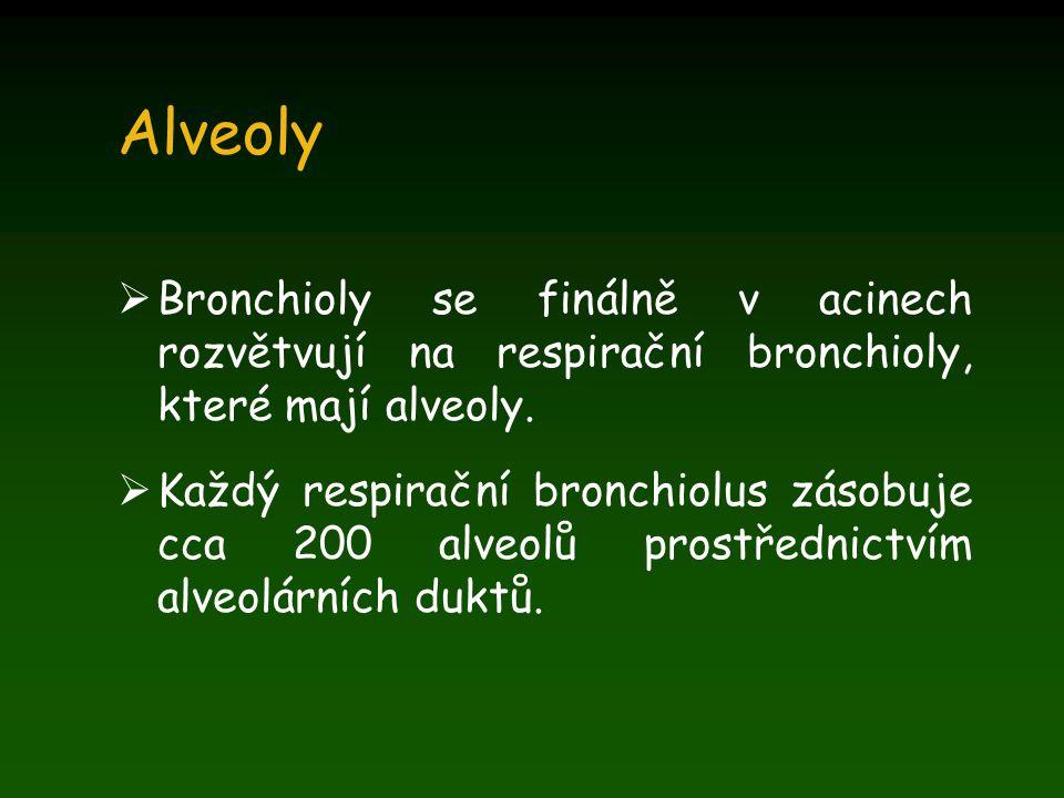 Ventilace bez perfúze Vzduch se dostává do alveolů i z alveolů, ale aleveoly nejsou perfundovány, takže nedochází k výměně plynů.