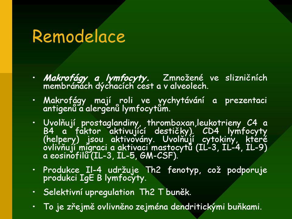 Remodelace Makrofágy a lymfocyty. Zmnožené ve slizničních membránách dýchacích cest a v alveolech. Makrofágy mají roli ve vychytávání a prezentaci ant