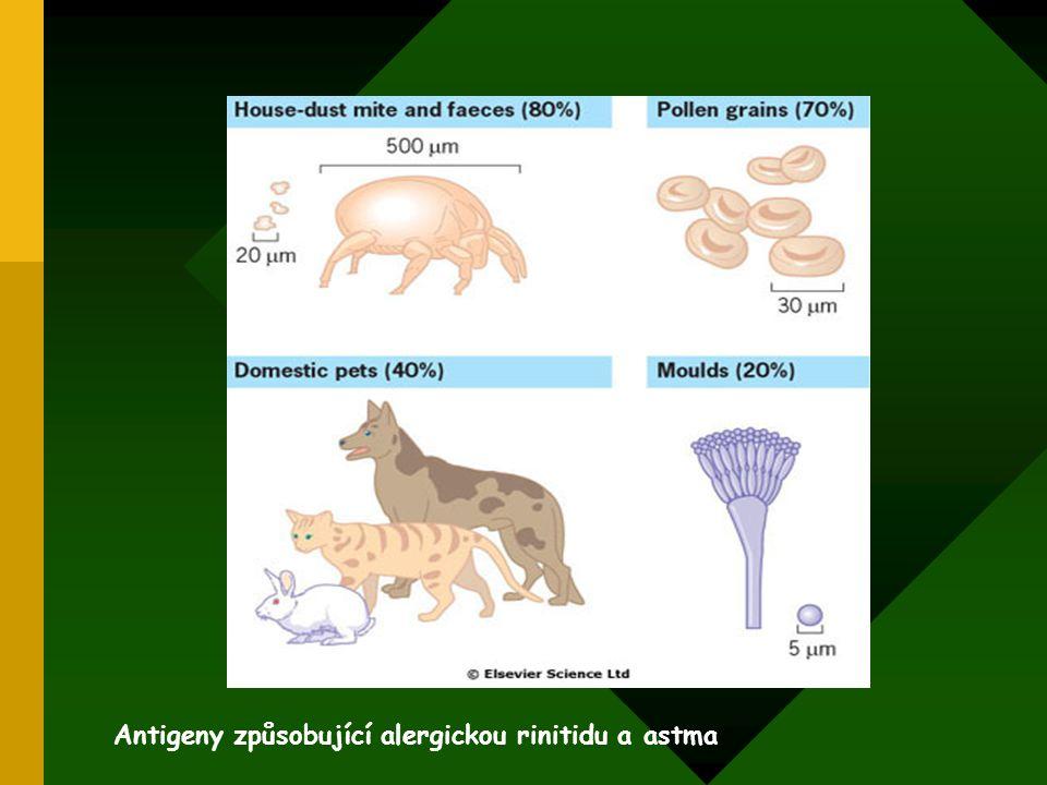 Antigeny způsobující alergickou rinitidu a astma