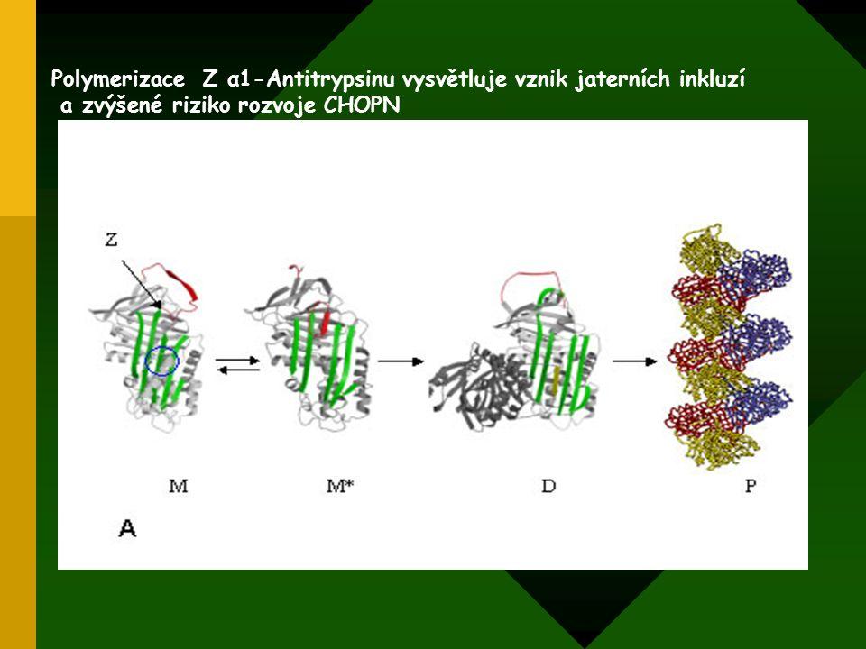 Polymerizace Z α1-Antitrypsinu vysvětluje vznik jaterních inkluzí a zvýšené riziko rozvoje CHOPN