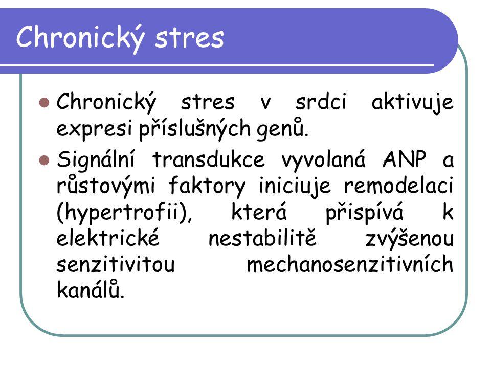 Chronický stres Chronický stres v srdci aktivuje expresi příslušných genů. Signální transdukce vyvolaná ANP a růstovými faktory iniciuje remodelaci (h
